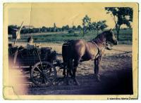 mali kum Zlatko Kurđipić sa konjima Ive Živkovića